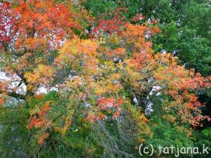 Fall 2012 (15) copy