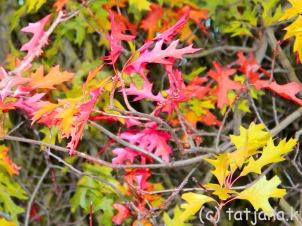 Fall 2012 (16) copy