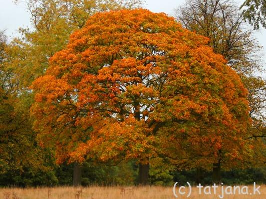 Fall 2012 (17) copy