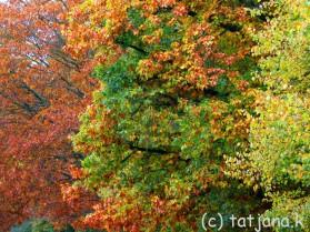 Fall 2012 (18) copy