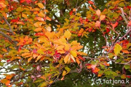 Fall 2012 (24) copy