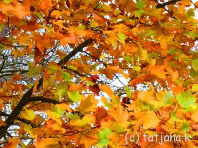 Fall 2012 (5) copy