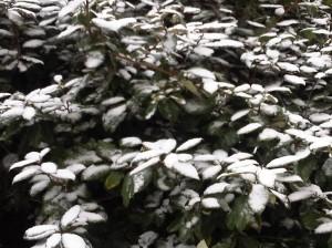 snow-2013